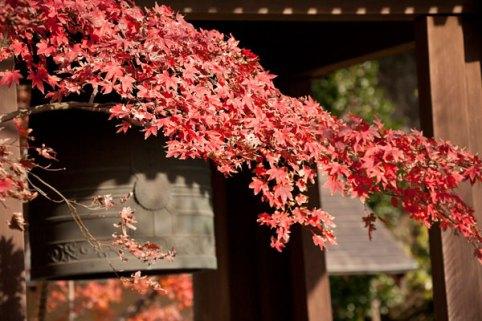 海蔵寺の紅葉。梵鐘と紅葉も相性抜群です。