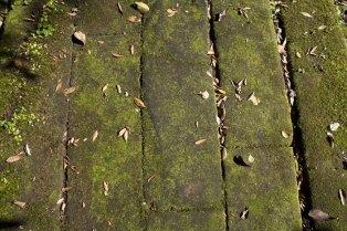 石畳はかなり苔むしています。