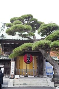 江ノ電長谷駅を降りたら長谷寺見物からスタート。