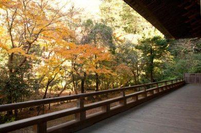 祖師堂の廊下から紅葉をのぞみと、また違った紅葉が味わえます。