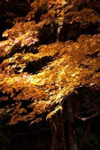 まるで動いているような紅葉の陰影。