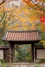 参道を登って、山門付近。最も紅葉しています。