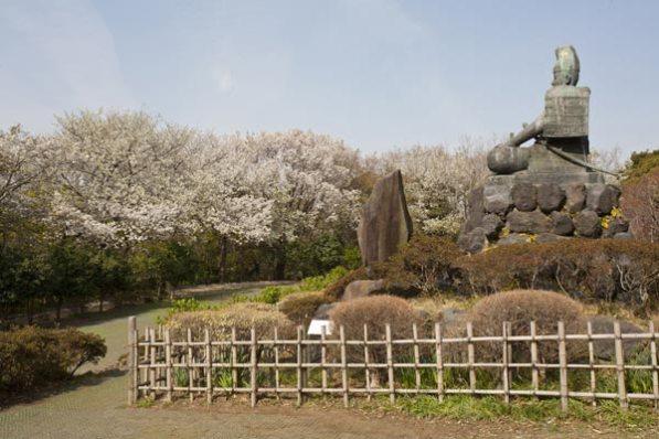 桜の季節には眼前を桜が囲みます。