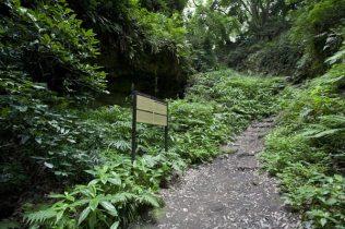 大仏トンネル側から入るとこの坂を下ってくることになります。切通しの解説看板はこちらにあります。