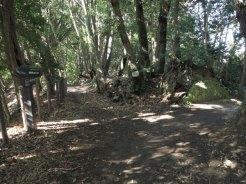 天園ハイキングコース瑞泉寺〜獅子舞上合流地点間。