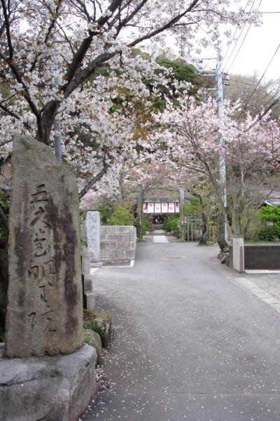 五大堂明王院の参道。桜が飾ります。