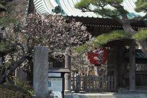 長谷寺山門の梅。長谷寺は梅といい、紅葉ライトアップといいこの場所がとても写真映えします。山門と提灯、背後に広がる山には境内が見える。長谷寺の顔はとてもよいなといつも思います。