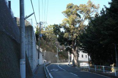 本瑞寺。車で行く場合は日の出交差点からまわって、大木が見えたらその信号手前を左に上がっていくと駐車場があります。