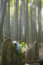 〈王道〉金沢街道をゆく。報国寺、竹の庭。説明不要の日本の美。