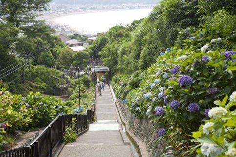 鎌倉のあじさい寺、成就院の参道。由比ケ浜とあじさいを眼下におさめます。