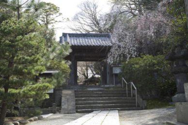 安養院を過ぎると道が二股に別れ「安国論寺」の看板が見えます。道なりの県道は右手ですが、安国論寺は左手。枝垂桜がかかる門が見えます。