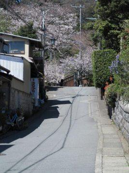 光則寺の桜は、門前の参道を入るとすぐに見えてきます。長谷寺の一本右の道ですからあわせて桜見物できます。