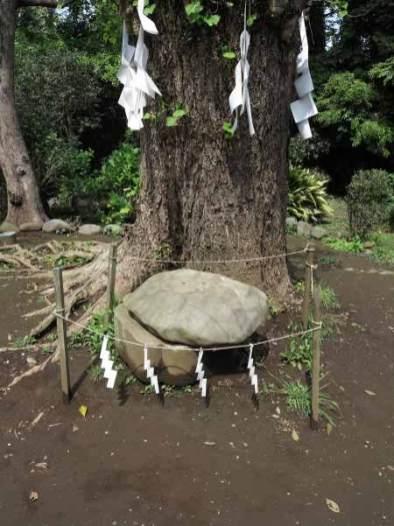 江ノ島、亀石。奥津宮の手前右手にあります。古い標文に鎌倉四名石の一つとして、またの名を「蔵六石」とあるそうです。1806年(文化3年)、弁財天を信奉する弁秀堂という人が金光明最勝王経の写経を奉納するため、上に置く石を探し、これをみつけて石ととともに奉納したといわれています。