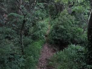 狭い尾根道です。