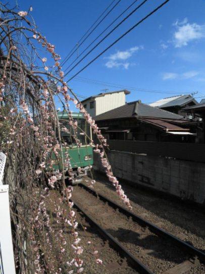 和田塚〜由比ケ浜間を走る江ノ電。編み物の糸や生地、素材を活かした衣料が鎌倉らしくて気に入っている和田塚「木木」さんのベランダから撮らせていただきました。