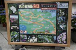 長谷寺のあじさい眺望の路。あじさいに囲まれて歩きます。