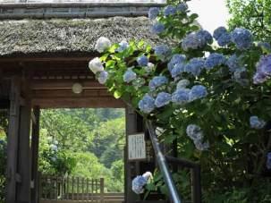 東慶寺の山門。鎌倉街道からでもこの茅葺き屋根がよい雰囲気です。