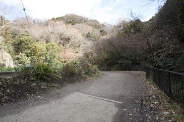 天園ハイキングコース、獅子舞の紅葉をみて下るとここにでてきます。道なりに歩くと永福寺跡にでます。