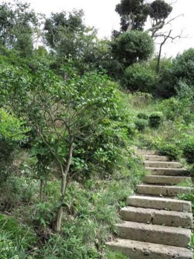 仏行寺背後の山をさらに上り、源太塚を目指します。