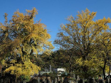 長勝寺法華堂前の紅葉。山門脇の大きな銀杏。