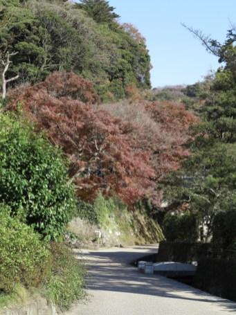 建長寺の紅葉。唐門前を左に入り、別院と半僧坊へと向かいます。