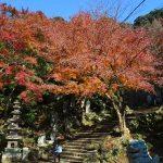 建長寺半僧坊へと向かう急な階段は紅葉に囲まれています。
