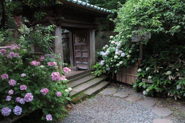 鎌倉らしさを感じられるあじさいの名所、英勝寺