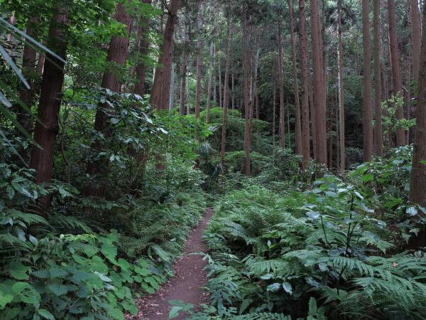 平成巡礼道に入ると鎌倉の歴史ある自然が迎えてくれます。