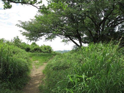 平成巡礼道。衣張山山頂に出てきます。