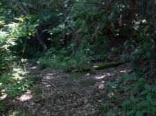 巡礼古道。山道に入ってすぐ、分岐があり、右手は本道、左手には金剛窟地蔵尊があります。