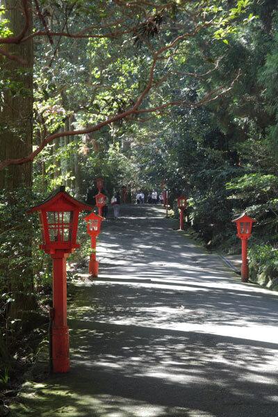 国道脇にある箱根神社参道入口の後はすぐに杉木立が始まります。