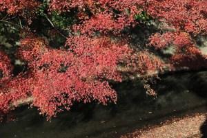 犬懸橋の紅葉。