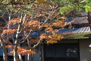 紅葉と一条恵観山荘。