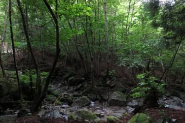 試し切り石の周囲は、ついぼーっと佇んでしまう、きれいな場所です。