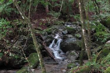 兜岩から試し切り石へと向かう鳥屋の沢林道。きれいな川が流れます。