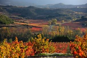 Viñas en otoño, Rioja Alta, DOC Rioja,Haro, la Rioja