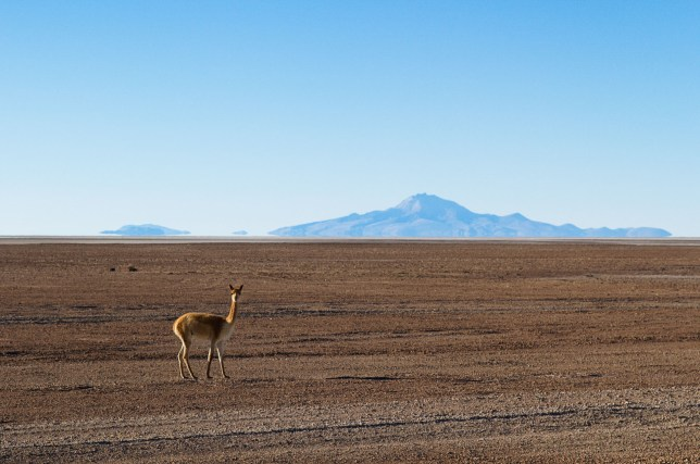 Reserva nacional Eduardo Avaroa. Bolivia.
