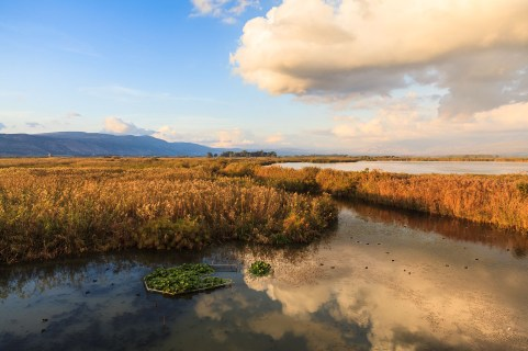 Hula Nature Reserve in evening light. Hula Valley. Israel.