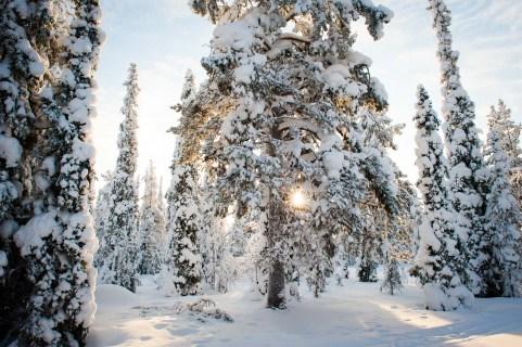 Laponia finlandesa
