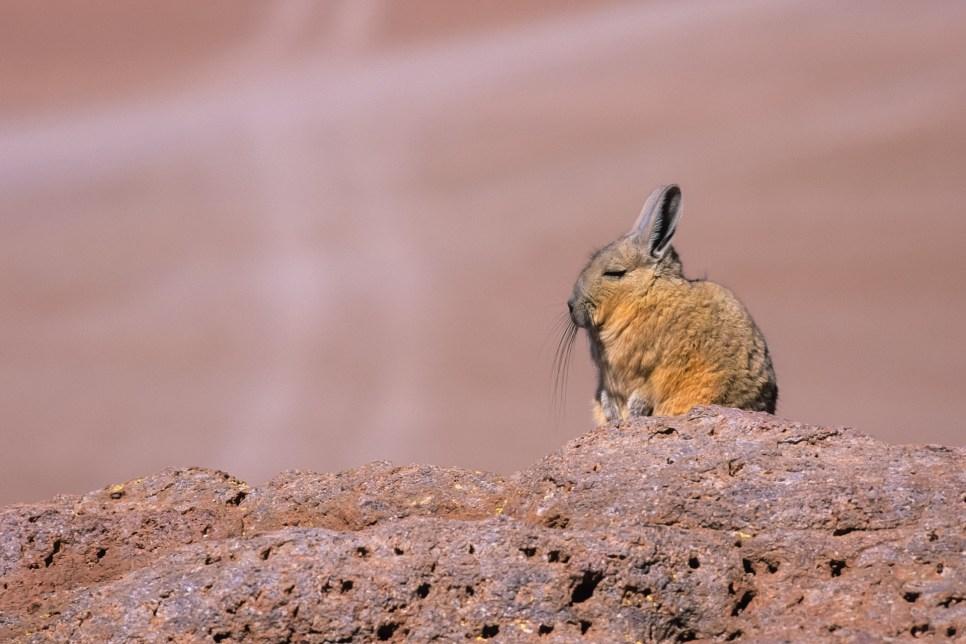 Salar de Uyuni_Bolivia_14