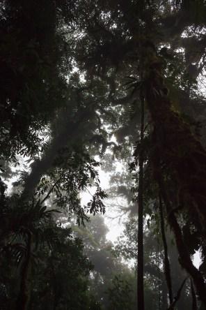 OD_Monteverde_03