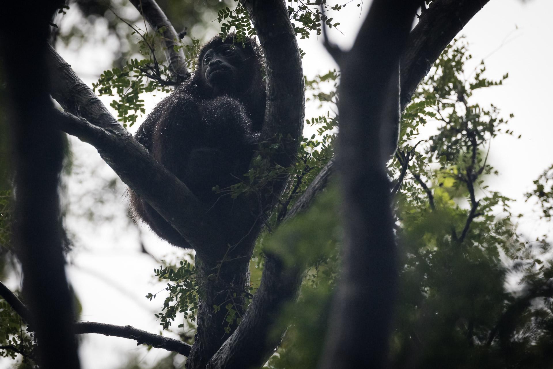 Parque Nacional Palo Verde Costa Rica  Kamaleon Viajes