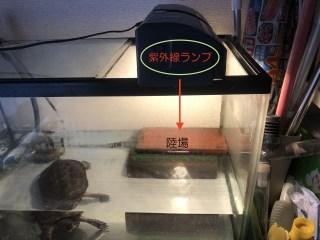 クサガメ飼育 紫外線ライト 設置例