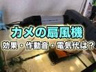 カメに使う扇風機・冷却ファンについて|効果や注意点・作動音・電気代を解説! クサガメ
