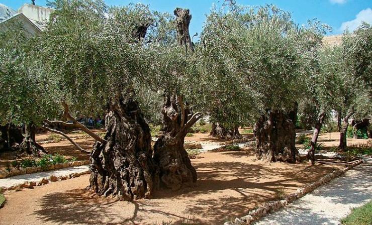 Getsemanski vrt