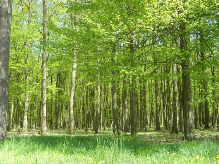 Spačvanska-šuma-2