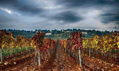 Vinogradi na Služnju