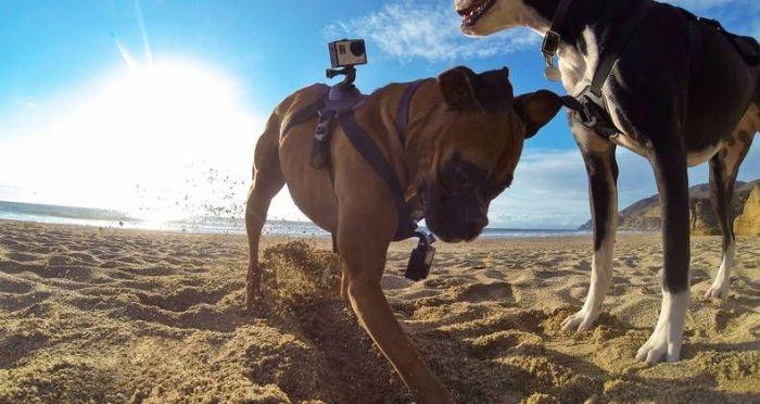 kiralik GoPro Fetch (Dog Harness)