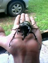 Kumbang 8