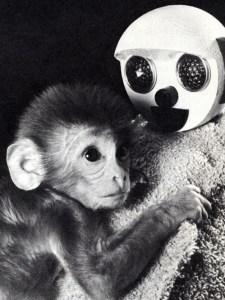 1harlow_monkey